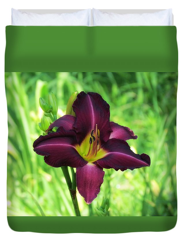 Debbie Troter Daylily Duvet Cover featuring the photograph Deep Purple by MTBobbins Photography