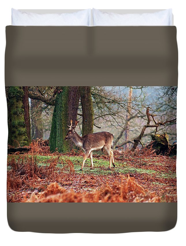 Deer Duvet Cover featuring the photograph Deer Among The Ferns by Susan Tinsley