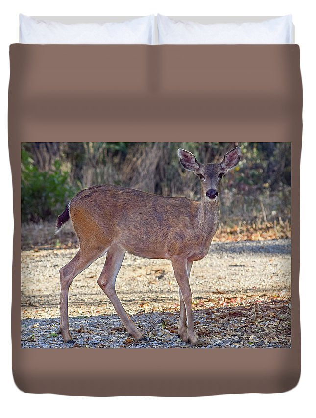 Deer Duvet Cover featuring the photograph Deer Doe - 2 by Alan C Wade