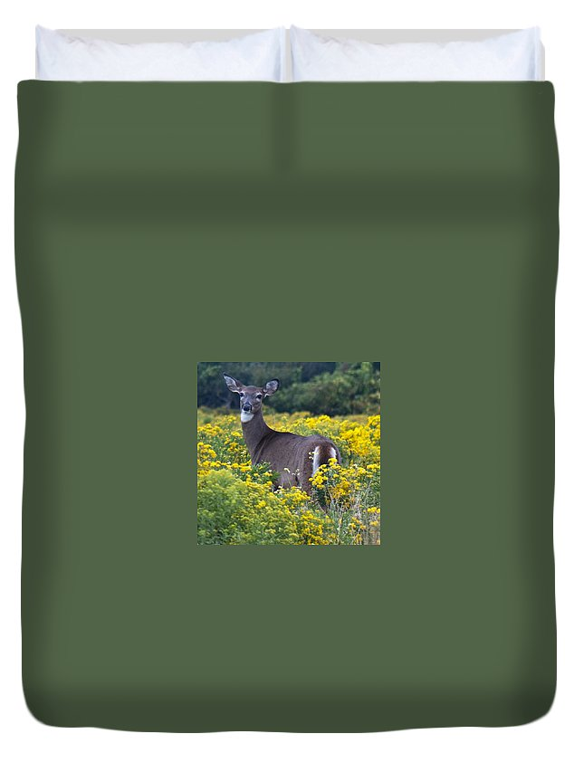 Deer Duvet Cover featuring the photograph Deer In A Field Of Yellow Flowers by Steven Natanson