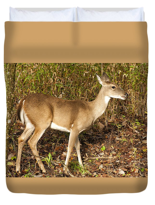 Deer Duvet Cover featuring the photograph Deer In Morning Ligh by Katherine Worley