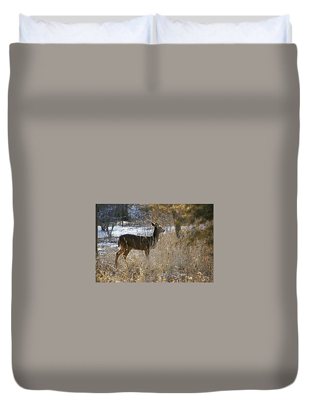 Deer Duvet Cover featuring the photograph Deer in Morning light by Toni Berry