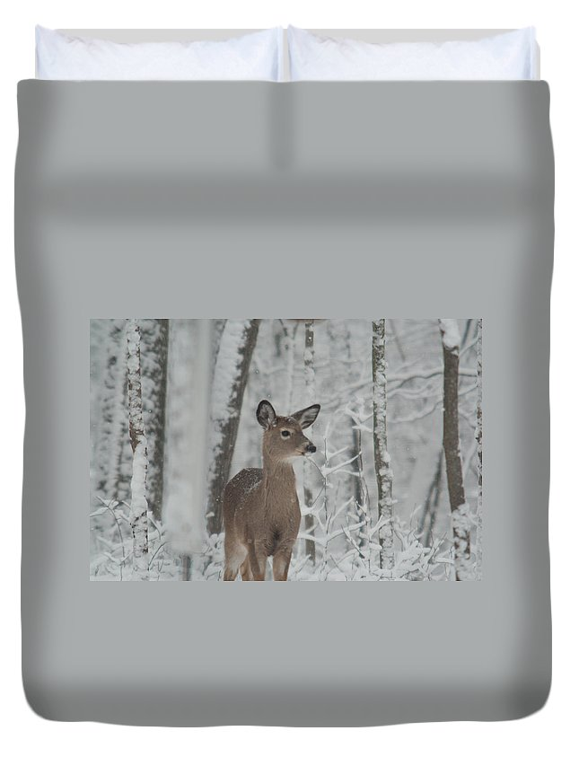 Deer Duvet Cover featuring the photograph Deer In The Snow by Douglas Barnett