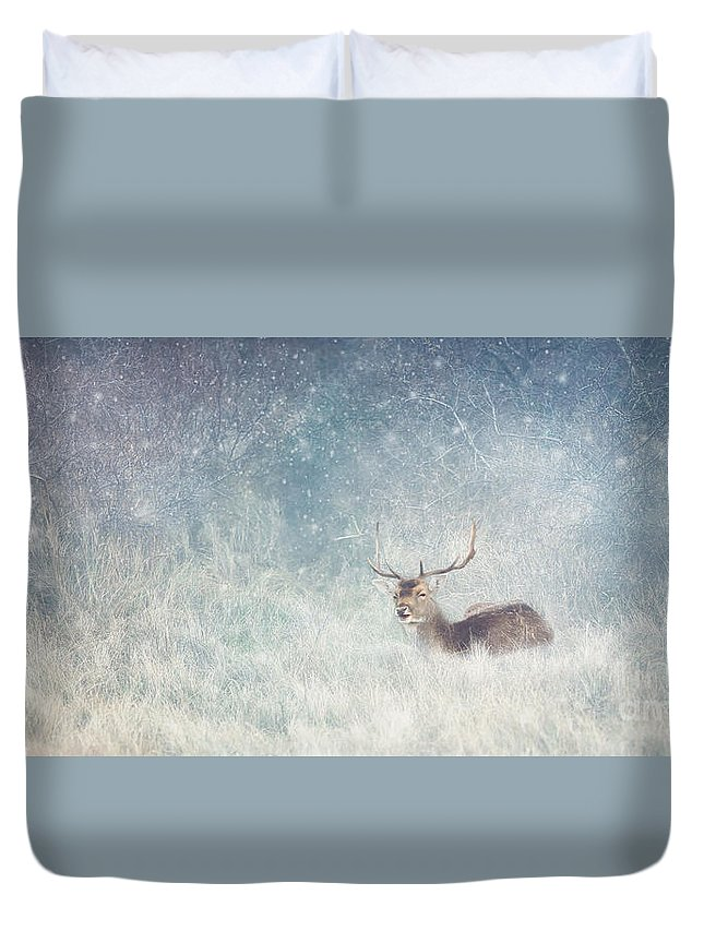 Christmas Duvet Cover featuring the photograph Deer In Winter Scene by LHJB Photography