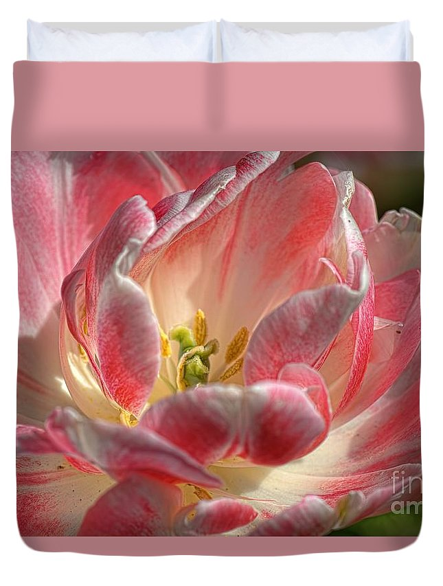 Tulips Duvet Cover featuring the photograph Delicate by Diana Mary Sharpton