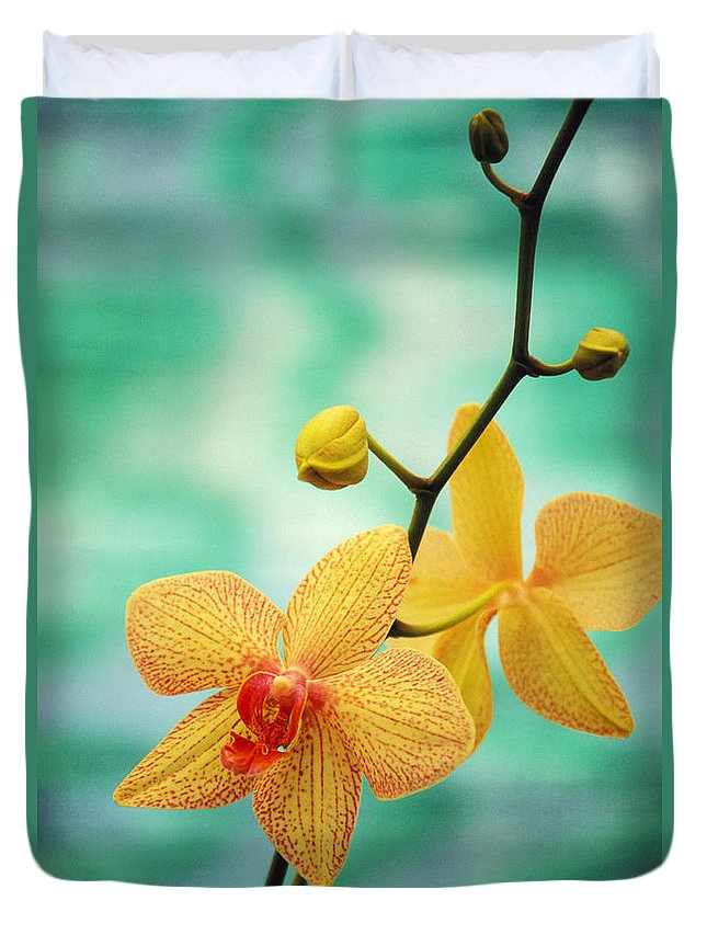 26-csm0163 Duvet Cover featuring the photograph Dendrobium by Allan Seiden - Printscapes