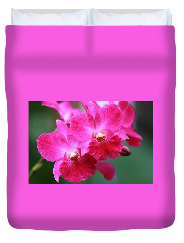 Orchid Duvet Cover featuring the photograph Dendrobium Orchid 1 by Kristina Jones