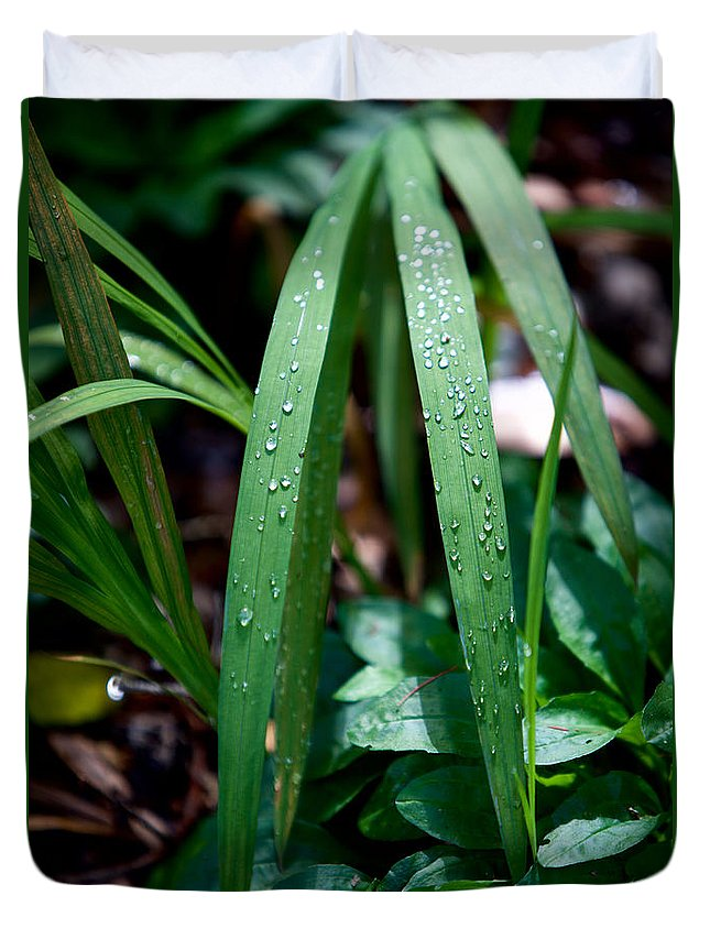 Dew Drops Duvet Cover featuring the photograph Dew Drops by Ravichandra Akaram