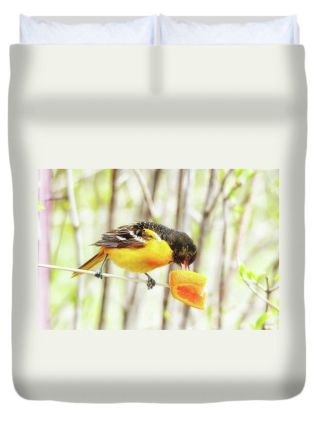 Baltimore Oriole Duvet Cover featuring the photograph Digging Right In by Susan Capuano