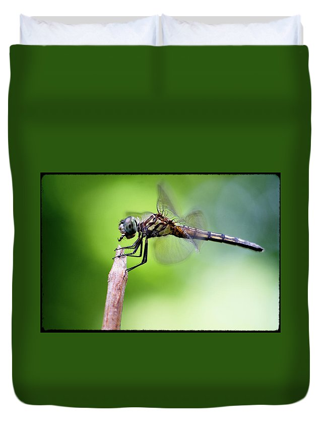 Dragonfly Duvet Cover featuring the photograph Dinner by David Cohron