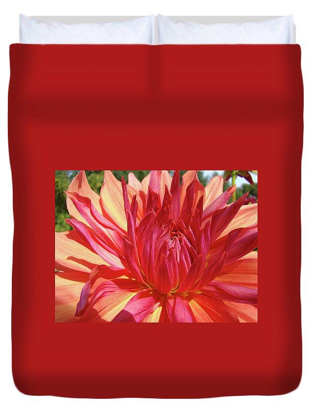 Dahlia Duvet Cover featuring the photograph Dinner Plate Dahlia Flower Art Print Orange Baslee Troutman by Baslee Troutman