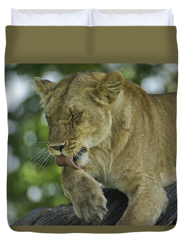 Africa Duvet Cover featuring the photograph Dirty Paws by Michele Burgess