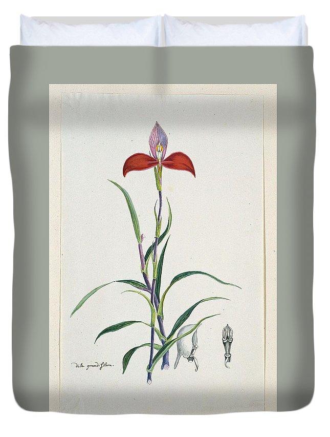 Flower Duvet Cover featuring the painting Disa Uniflora Bergius Red Disa Or Pride Of Table Mountain, Robert Jacob Gordon, 1777 - 1786 by Robert Jacob Gordon