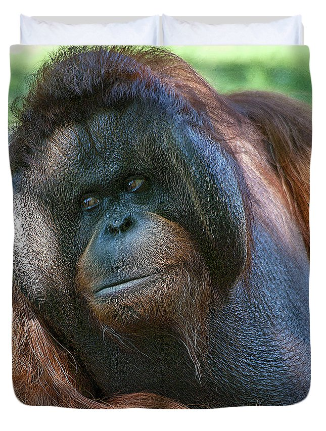 Orang Untang Duvet Cover featuring the photograph Disapproving Glance by Heiko Koehrer-Wagner