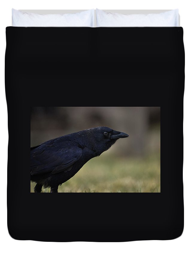 Crow - Rae Ann M. Garrett - Photography - Images Of Crows - Corvids- Mother Crow- For People Who Love Crows - Crow Lovers - International Known Artist - Professional Artists- Duvet Cover featuring the photograph Distinctly by Rae Ann M Garrett