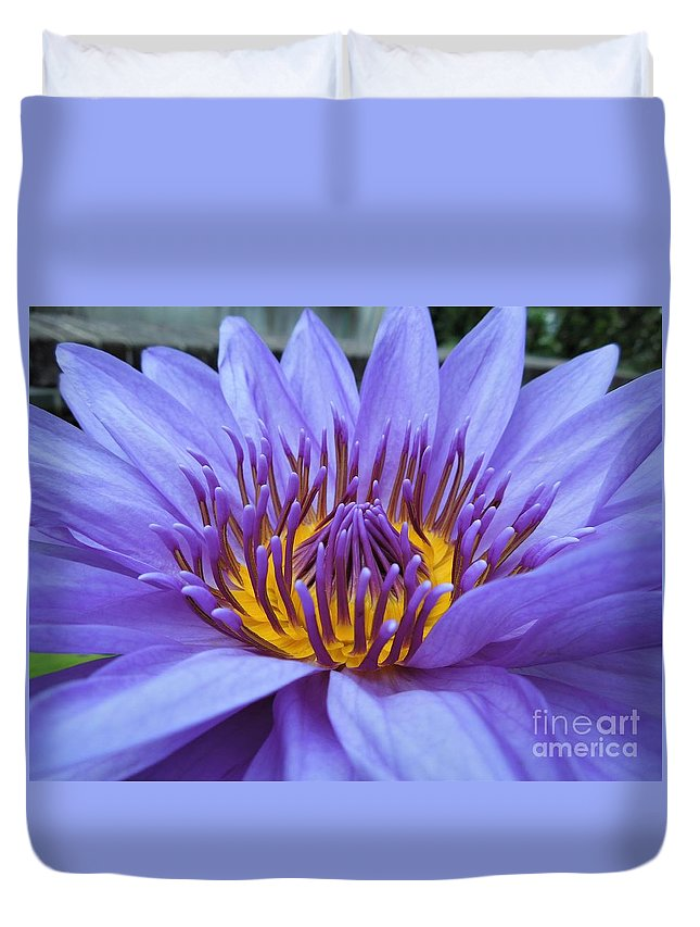 Water Lily Duvet Cover featuring the photograph Divine by Chad and Stacey Hall
