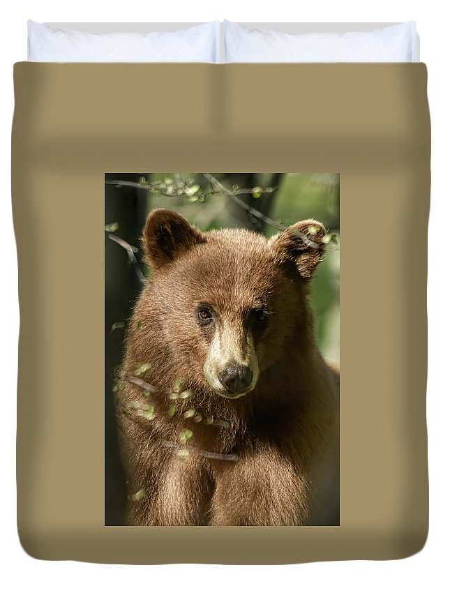 Black Bear Duvet Cover featuring the photograph Do Ya Think I'm Sexy by Dennis Bolton