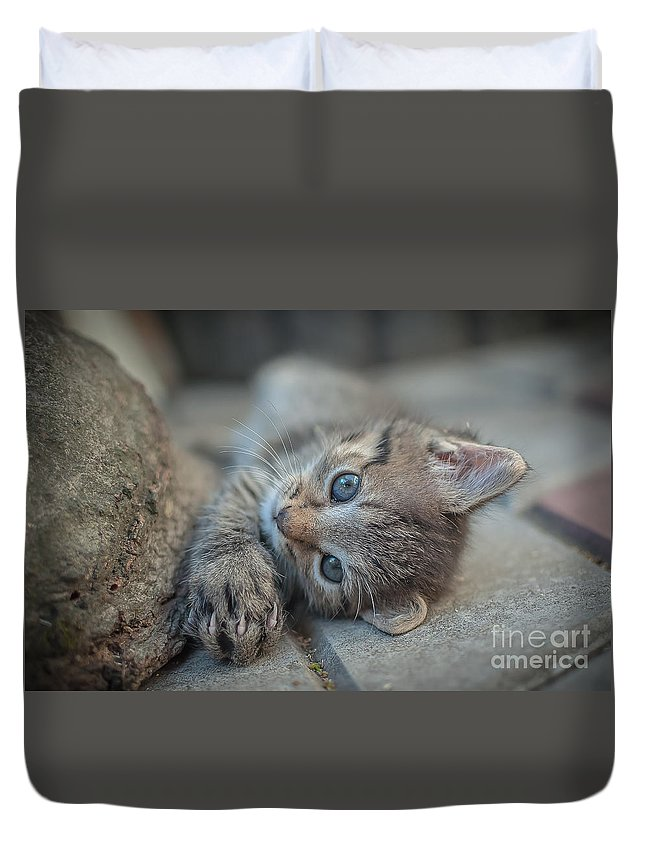 Kitten Duvet Cover featuring the photograph Do You Like Me Right by Lyudmila Prokopenko