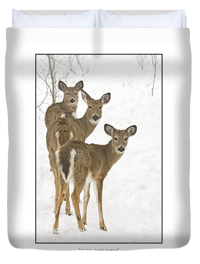 Whitetail Deer Duvet Cover featuring the photograph Doe-ray-meh by Michael Greiner