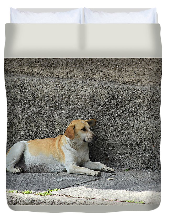 Dog Duvet Cover featuring the photograph Dog Next To A Wall by Robert Hamm