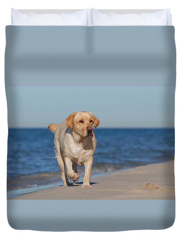 Animal Duvet Cover featuring the photograph Dog On The Beach by Waldek Dabrowski