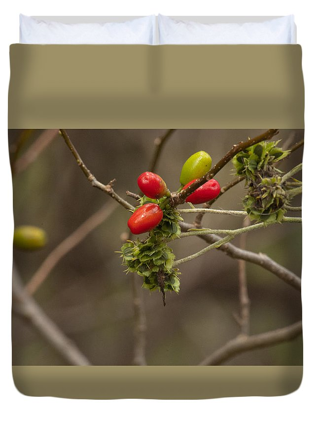 Leaves Turning Duvet Cover featuring the photograph Dogwood Berries by Tim Atchley