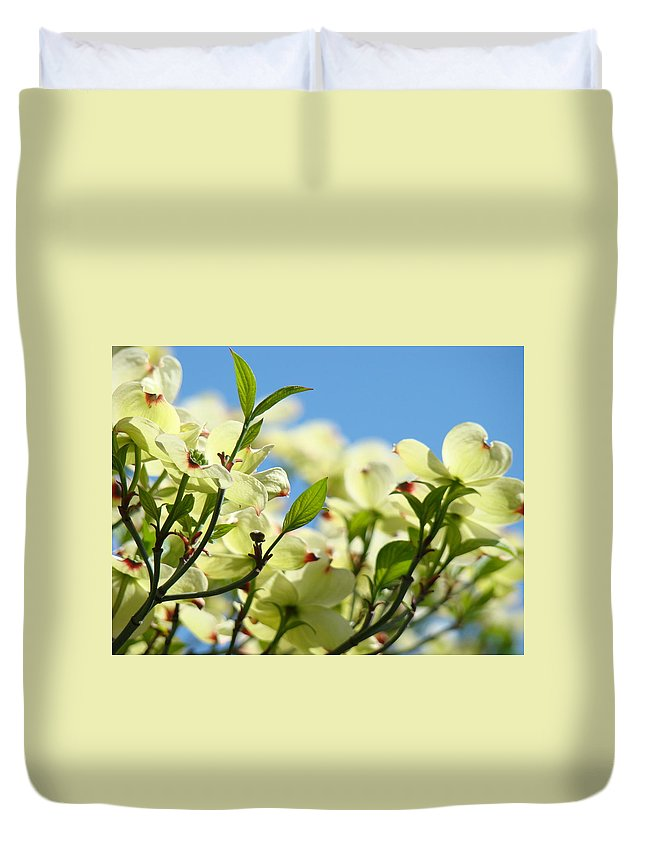 Dogwood Duvet Cover featuring the photograph Dogwood Flowers Art Prints Canvas White Dogwood Tree Blue Sky by Baslee Troutman