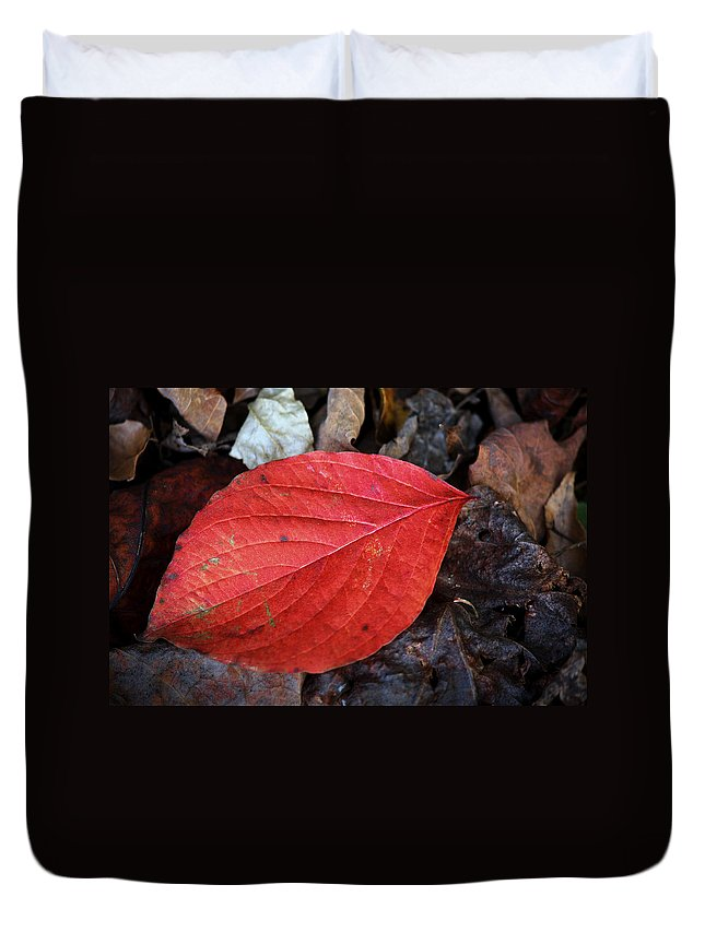 Dogwood Duvet Cover featuring the photograph Dogwood Leaf by Teresa Mucha