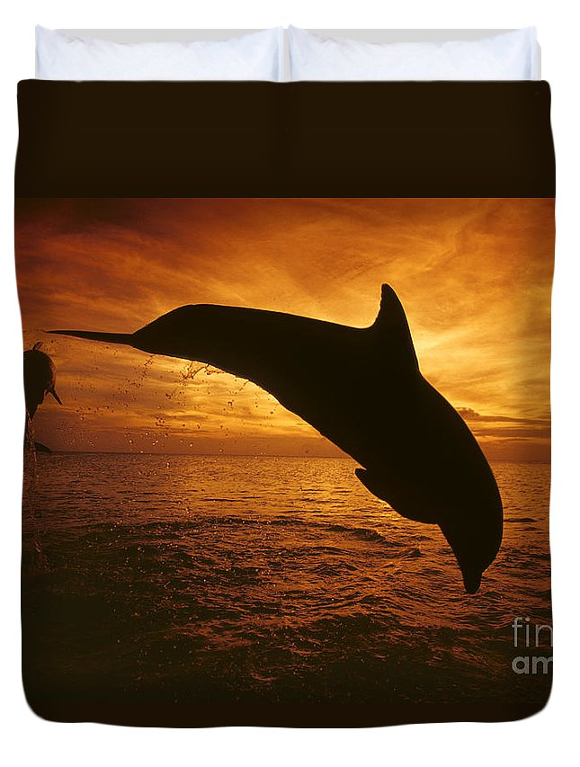 Amaze Duvet Cover featuring the photograph Dolphins And Sunset by Dave Fleetham - Printscapes