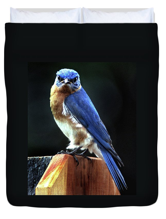 Bird Duvet Cover featuring the photograph Dominator by Skip Willits