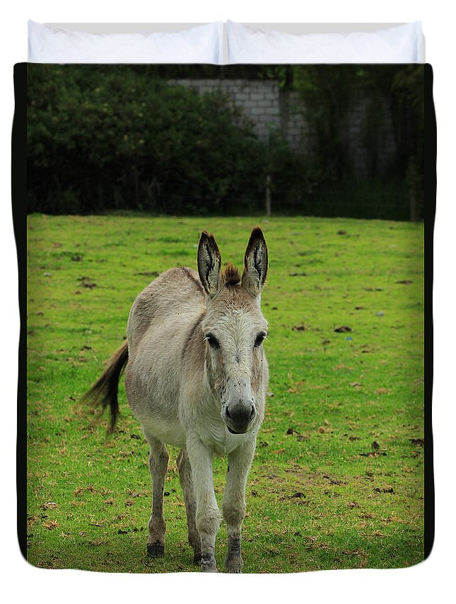 Donkey Duvet Cover featuring the photograph Donkey On A Farm by Robert Hamm