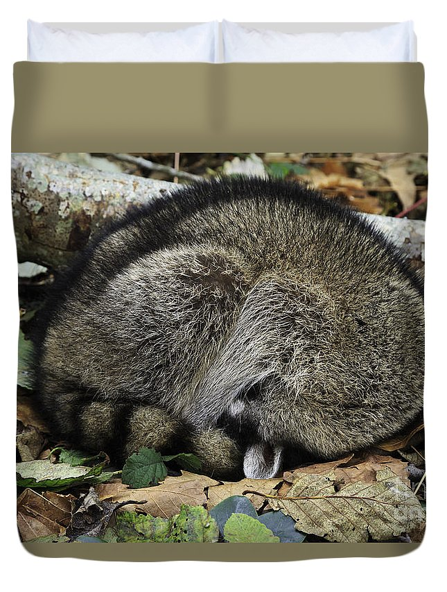 Raccoon Duvet Cover featuring the photograph Do Not Disturb by Tim Hauf