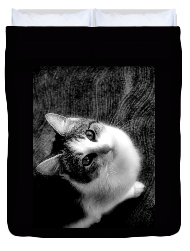 Cat Duvet Cover featuring the photograph Don't Ever Leave by Gaby Swanson