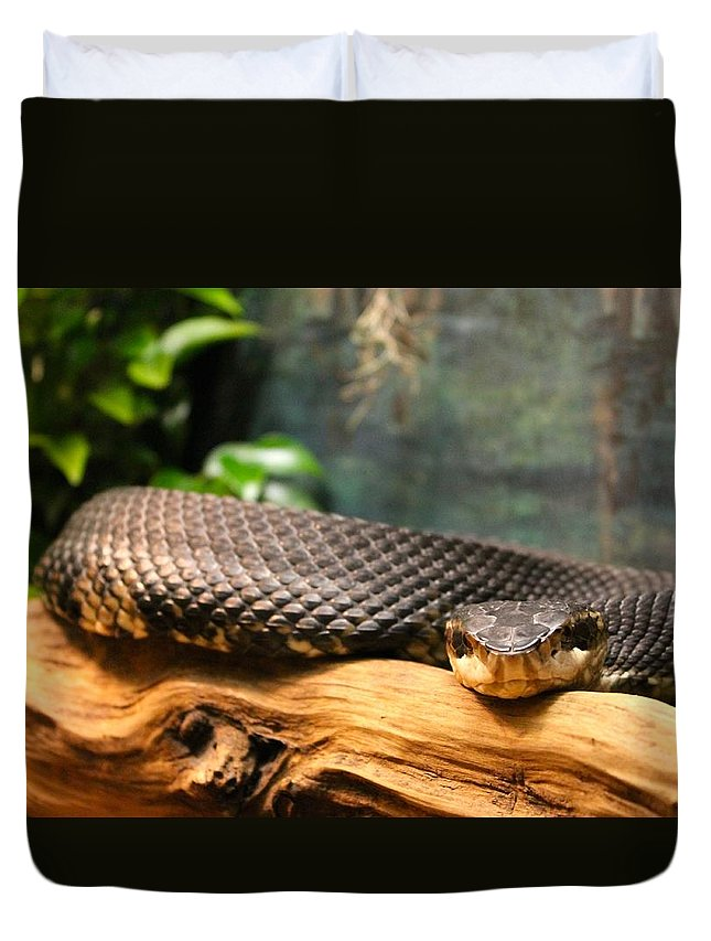 Snake Duvet Cover featuring the photograph Don't Move by Jennifer Raines