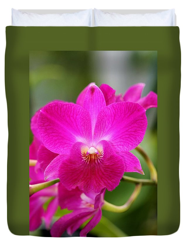 Orchid Duvet Cover featuring the photograph Dendrobium Orchid 2 by Kristina Jones