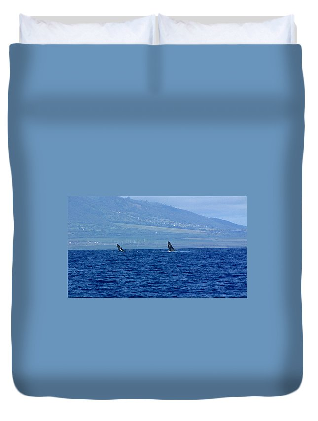 Whale Duvet Cover featuring the photograph Double Breach by Sarah Houser