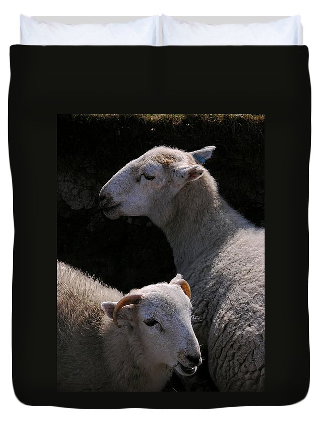 Sheep Duvet Cover featuring the photograph Double Portrait by Harry Robertson
