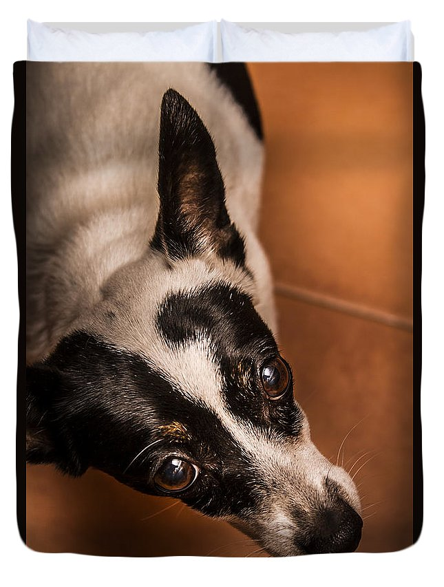 Pet Duvet Cover featuring the photograph Dough-eyed Dog by Jorgo Photography - Wall Art Gallery