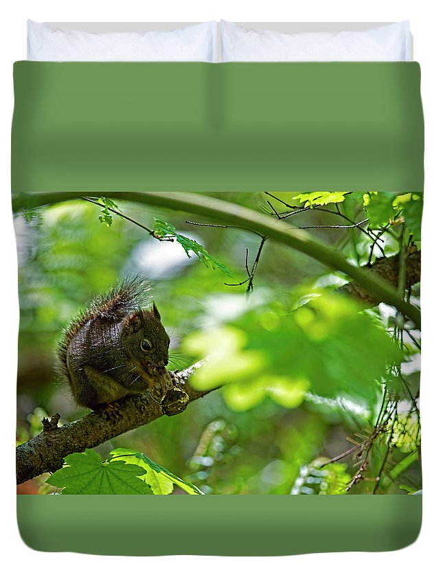 Douglas Squirrel Duvet Cover featuring the photograph Douglas Squirrel Drops Nut by Sharon Talson
