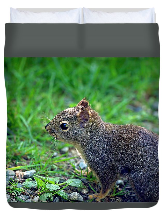 Douglas Squirrel Duvet Cover featuring the photograph Douglas Squirrel by Sharon Talson