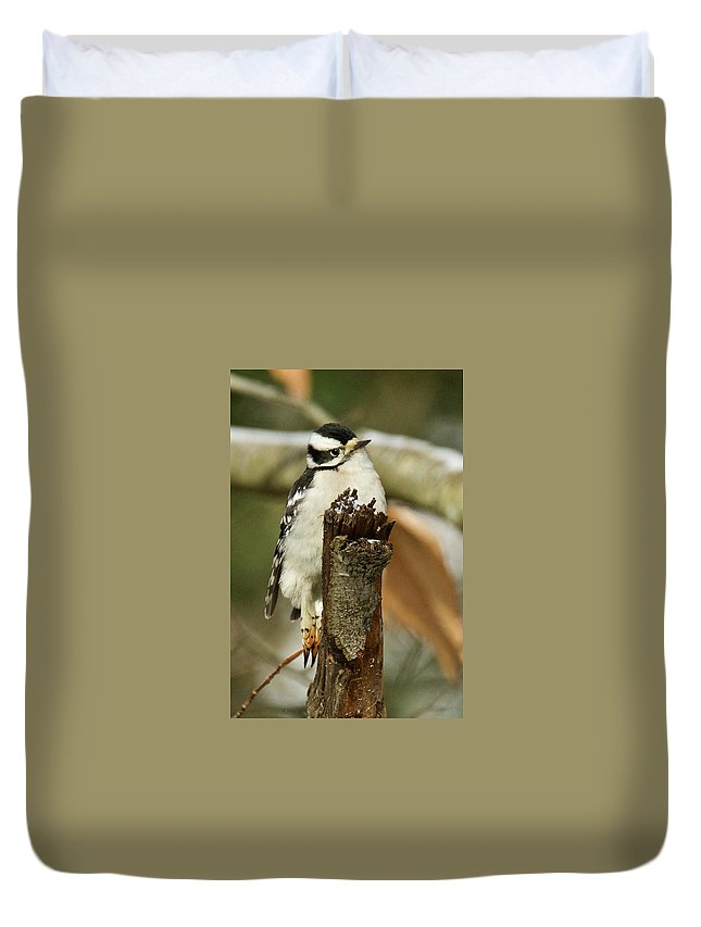 Female Duvet Cover featuring the photograph Downey Woodpecker Female 4417 by Michael Peychich