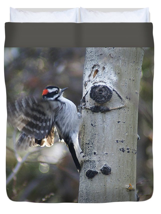 Woodpecker Duvet Cover featuring the photograph Downy Woodpecker by Heather Coen
