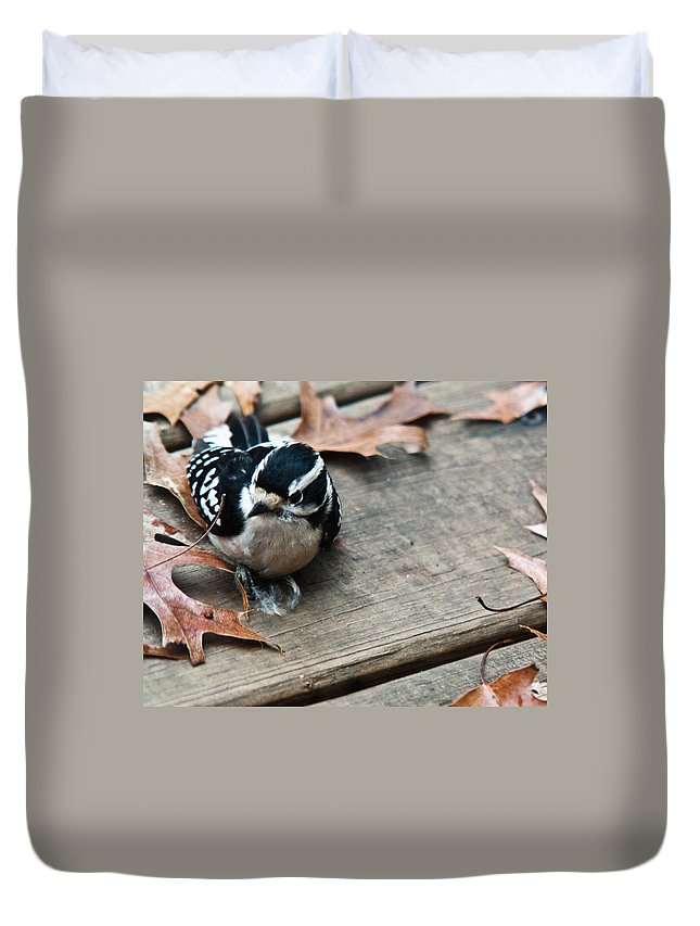 Cove Duvet Cover featuring the photograph Downy Wooodpecker Picoides Pubscens by Douglas Barnett