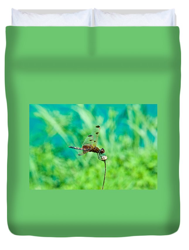 Dragonfly Duvet Cover featuring the photograph Dragonfly Hanging On by Douglas Barnett