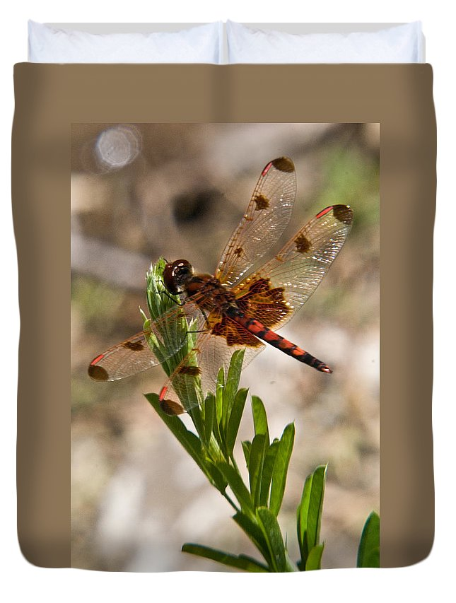 Dragonfly Duvet Cover featuring the photograph Dragonfly Resting 2 by Douglas Barnett