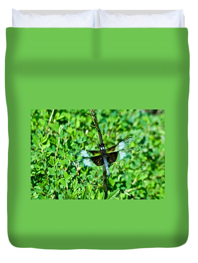 Dragonfly Duvet Cover featuring the photograph Dragonfly Resting On Stem by Douglas Barnett