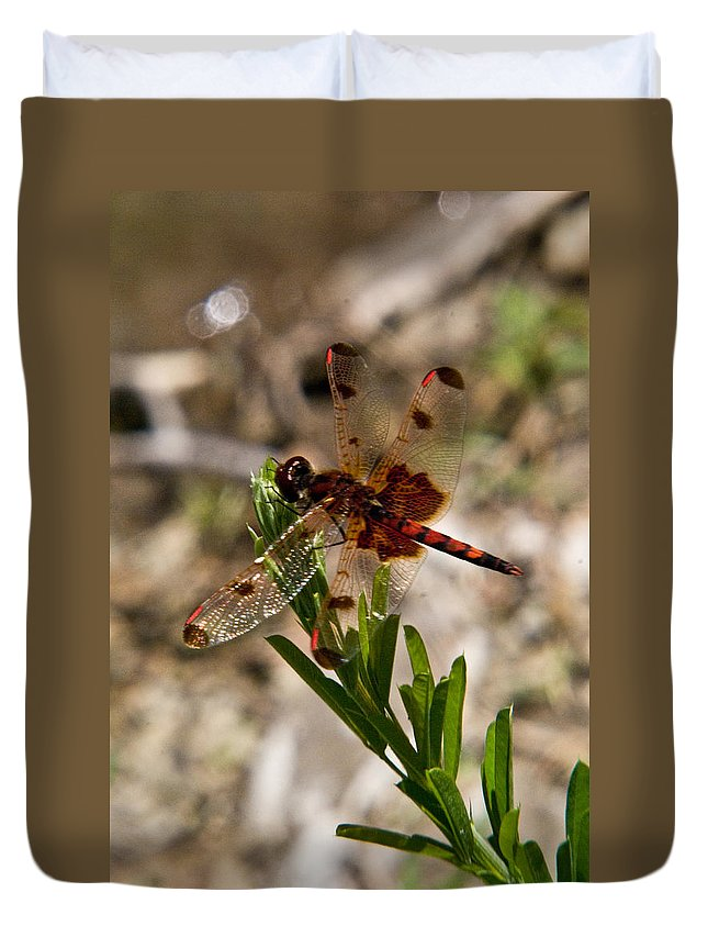 Odonata Duvet Cover featuring the photograph Dragonfly Resting On The Green by Douglas Barnett