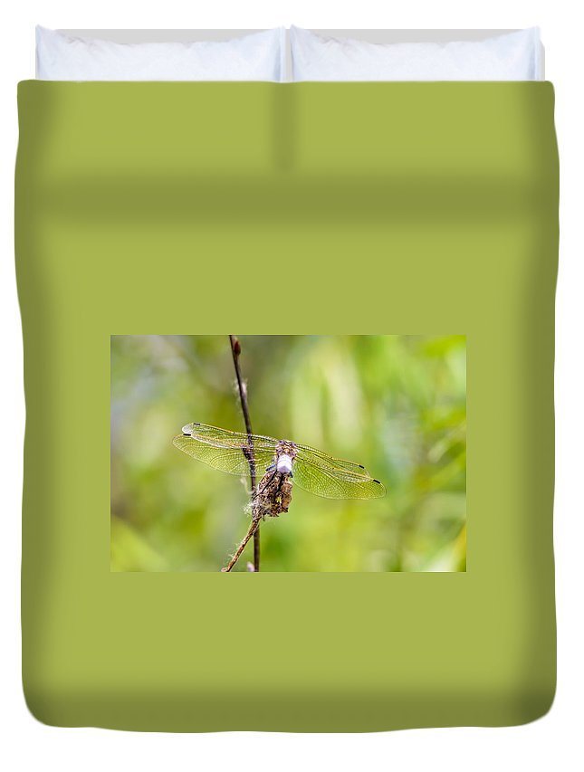 Arthropod Duvet Cover featuring the photograph Dragonfly Wings by Alain De Maximy