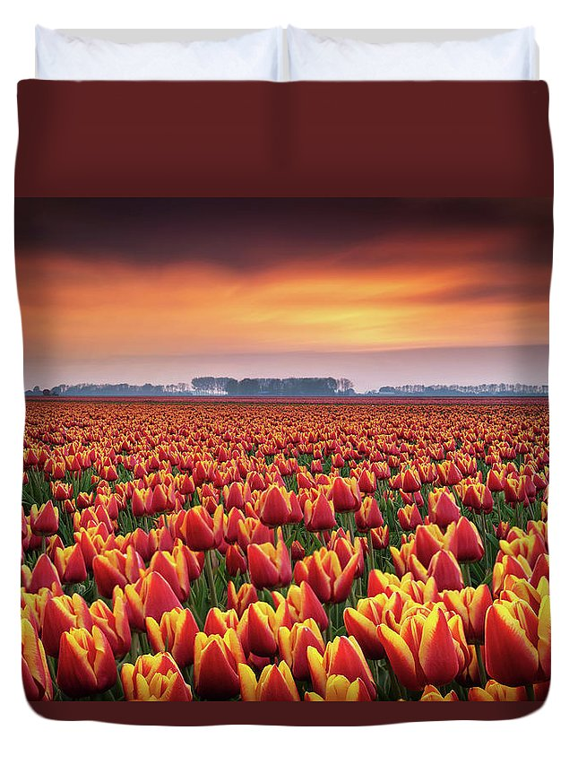 Tulips Duvet Cover featuring the photograph Dramatic Tulips by Martin Podt