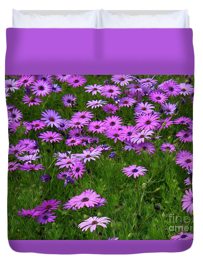 Floral Duvet Cover featuring the photograph Dreaming of Purple Daisies by Carol Groenen